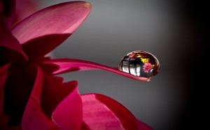 drop on a flower